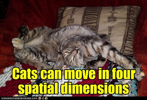 Cats can move in four spatial dimensions