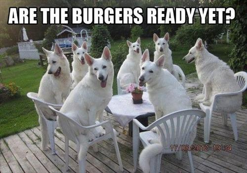 dogs barbeque burgers funny