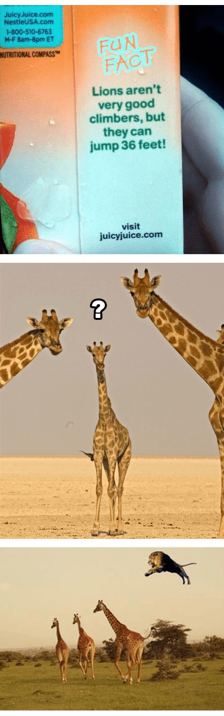 lions funny giraffes seems legit - 7565378560