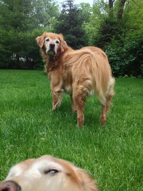 photobomb dogs funny - 7565642496