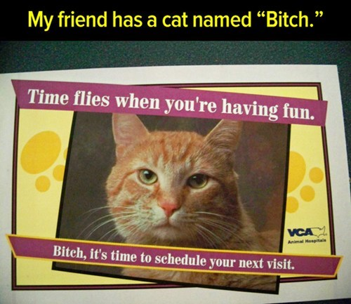 vet Cats cat names - 7566008064