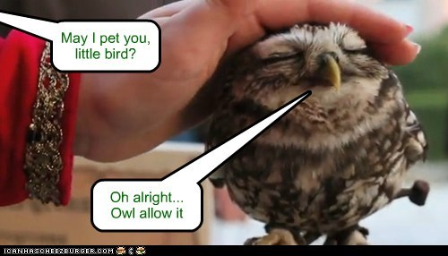 May I pet you, little bird? Oh alright... Owl allow it
