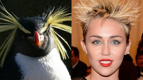 penguins,totally looks like,miley cyrus,funny