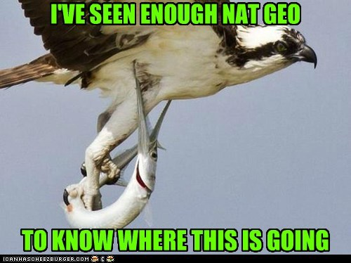 bird,fish,nat geo,funny