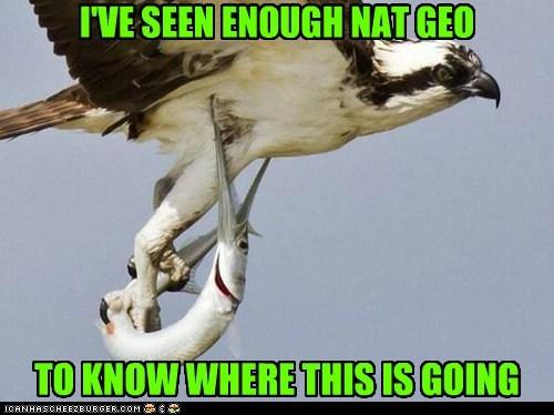 bird fish nat geo funny - 7566597632