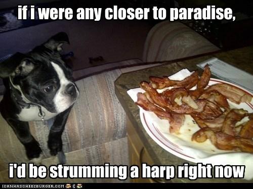 paradise,religious,funny,bacon