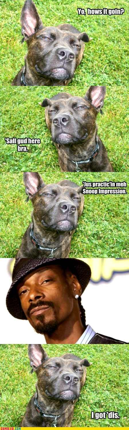 dogs impressions funny snoop dogg - 7567618048