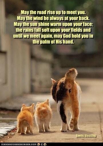 For Lost Kitties, Everywhere