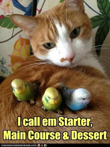 birds food hunter - 7568424704