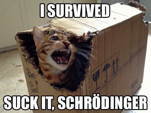 escape box science funny schrodingers-cat - 7568480768