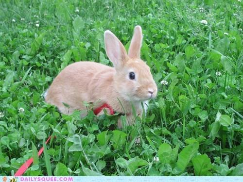leash bunny