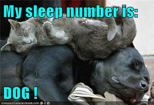 dogs sleep number Cats funny
