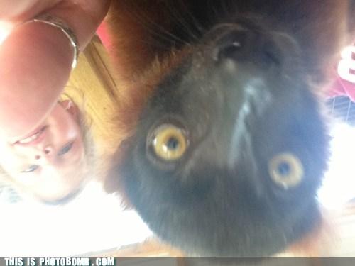 photobomb,lemurs,funny