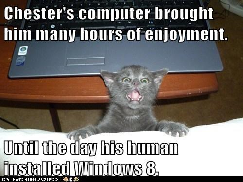 Chester's computer brought him many hours of enjoyment. Until the day his human installed Windows 8.