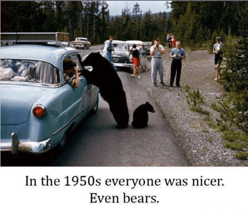 bears,1950s,animals