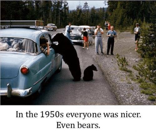 bears 1950s animals - 7569072128