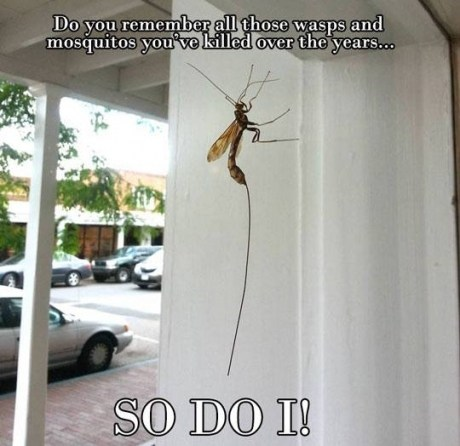 bugs mosquitos wtf omg - 7569115136