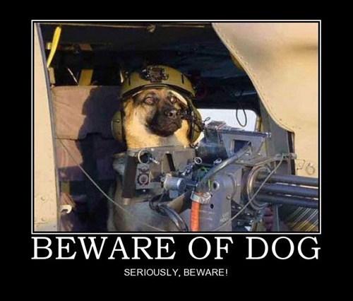 wtf beware gun dogs funny - 7569257728
