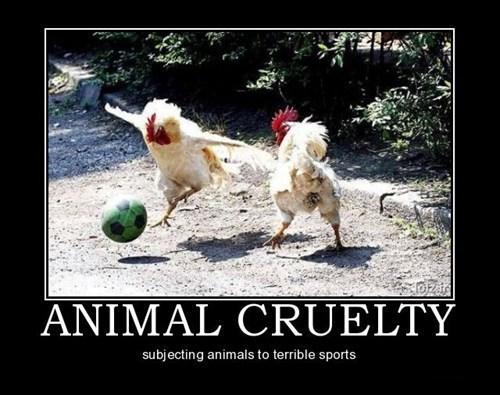 wtf chicken soccer funny - 7569272576