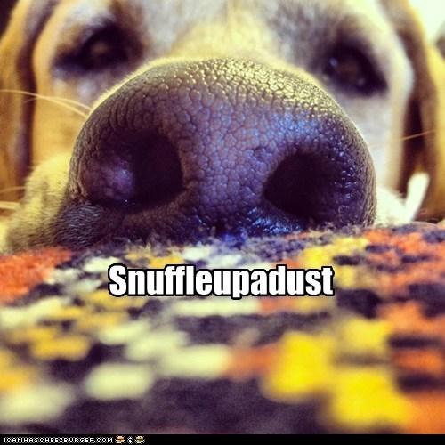 Snuffleupadust