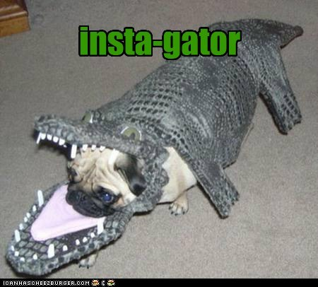 costume crocodile alligator funny - 7570210560