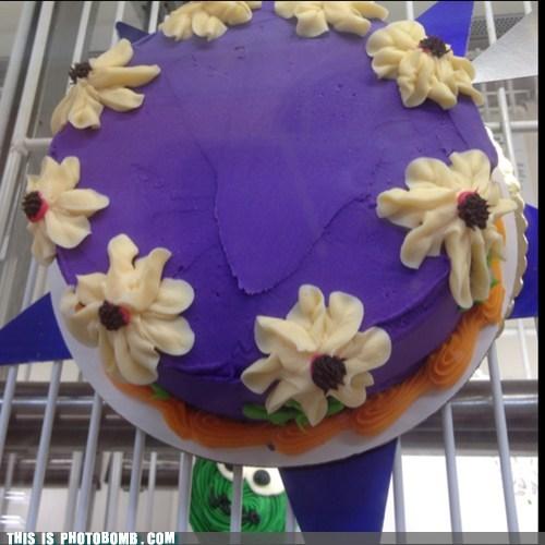 cake,photobomb,funny