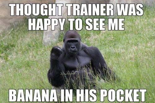 gorillas Memes animals - 7572196096
