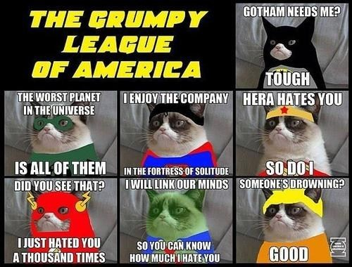 Grumpy Cat,justice league,Memes,superheroes