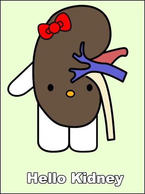 wtf hello kitty kidneys - 7572237312