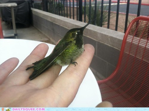humming bird injured flying - 7572447232