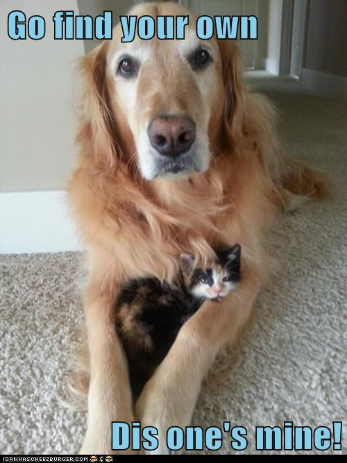 dogs sharing kitten cute Cats - 7572529664