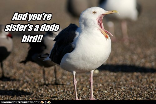 insult bird seagull funny - 7573088512