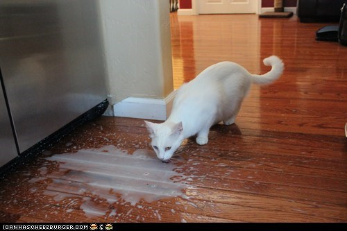 Not everyone cries over spilled milk