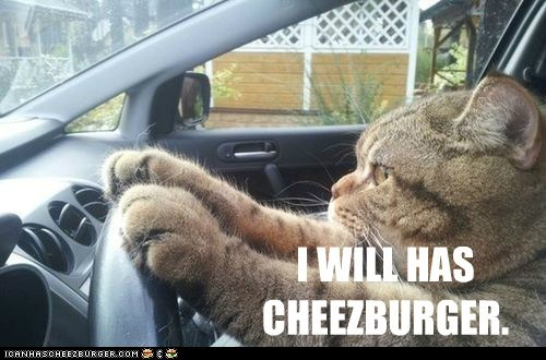 Cheezburger Image 7574948608