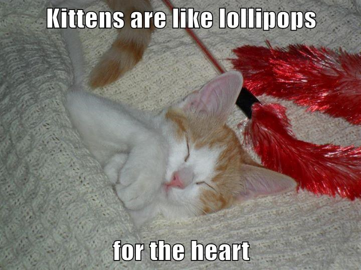 Kittens are like lollipops  for the heart