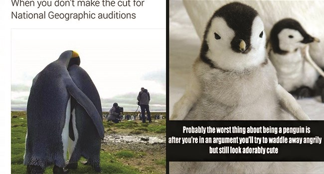 penguin memes penguins Memes daily problems funny - 7576069