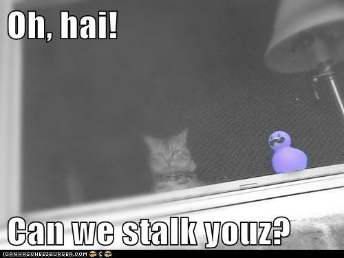 Oh, hai!  Can we stalk youz?