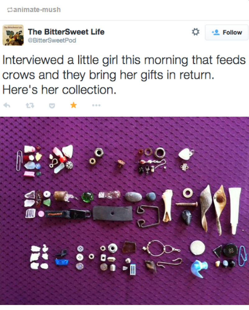crows bringing gifts to girl