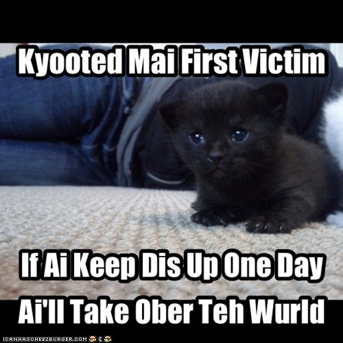 world domination kitten cute - 7578818560
