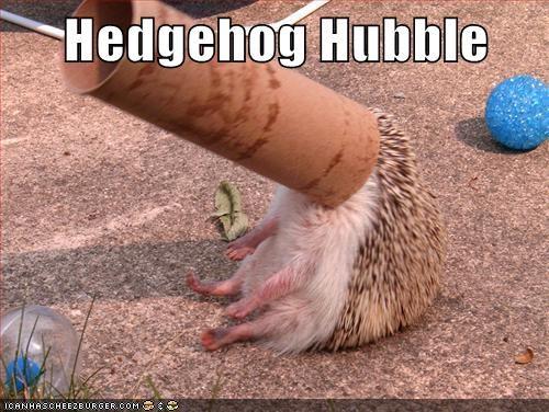 hedgehog toilet paper roll funny - 7578950656