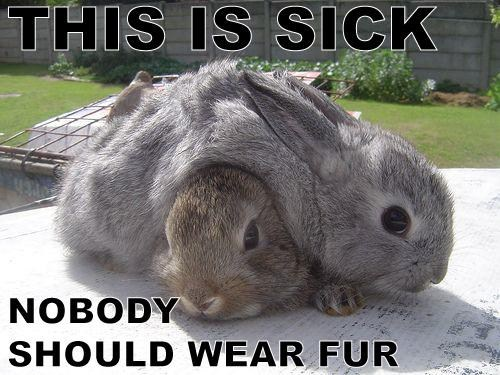 bunnies,fur,peta,cute