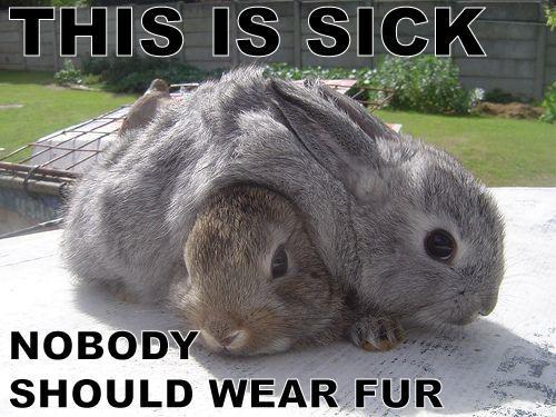 bunnies fur peta cute - 7578985216