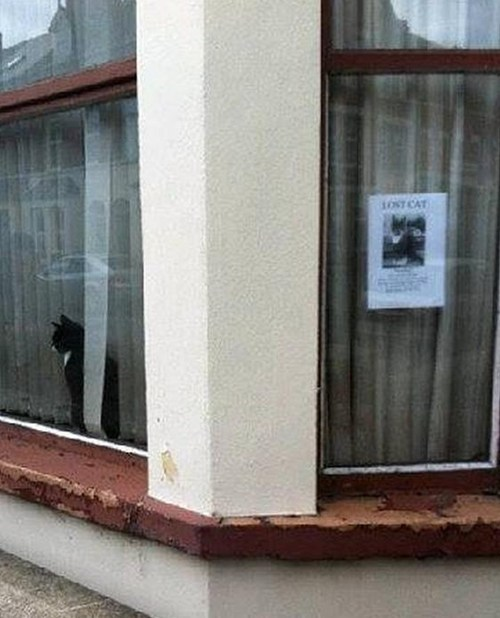 poster,funny,lost,window