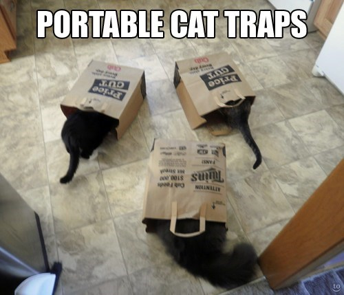traps,bags,funny