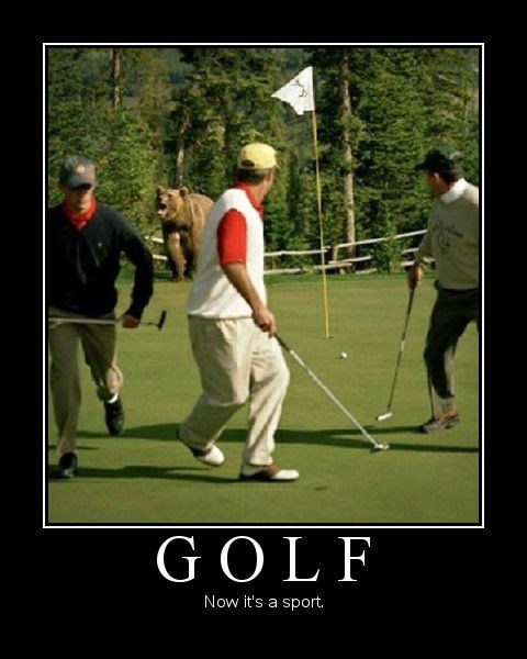 golf sport bear funny