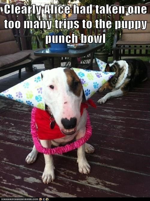 punch bowl Party funny - 7579372800