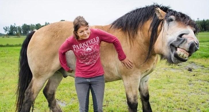 funny horse pics