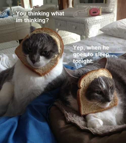 cat breading revenge funny - 7579422464