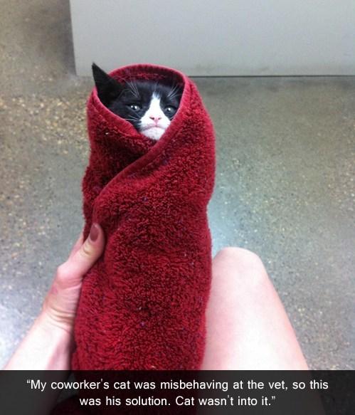 burrito misbehaving vet funny - 7579424000