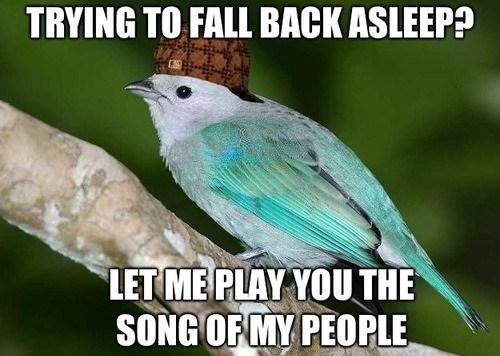scumbag birds Memes - 7579449088